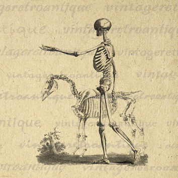 Printable Image Skeleton with Horse Graphic Download Digital Illustration Vintage Clip Art for Transfers Printing etc HQ 300dpi No.2216