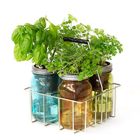 Self Watering Herbal Garden Jar Kits