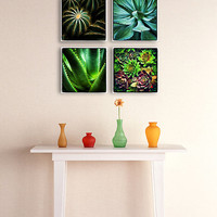 Succulent Wall Collage - Grouping of 4 Canvas Wrapped Prints - Chicago Photography Fine Art home decor cactus fun cacti plants botanicals