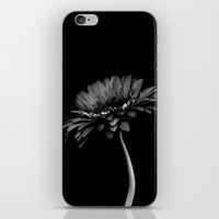 Daisy gerbera. Black and white iPhone Skin by vanessagf