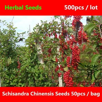 ^^Deciduous Woody Vine Schisandra Chinensis Seeds 500pcs, China Five Flavor Berry Seed, Health Care Magnolia Vine Wu Wei Zi Seed