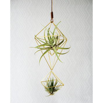 Himmeli fig. 8 - Double Brass Teardrop | Modern Minimalist Geometric Hanging Ornament, Mobile, and Air Plant Holder
