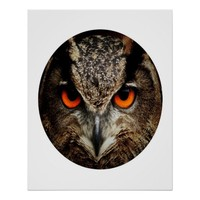Intense Owl Close-UpPhotograph In A Circle 24 X 30 Poster