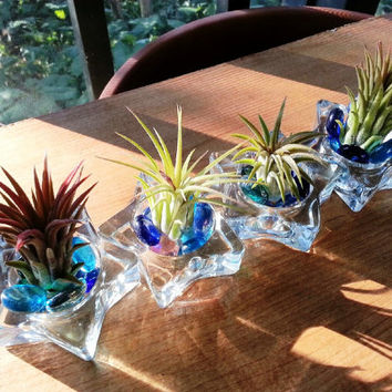 Air Plants in Glass with Colored Glass Beads Set of 4