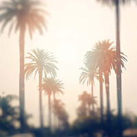 Los Angeles Photography, sunshine, palm trees, travel, rain, glow, California, summer, downtown, city
