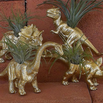 Dinosaur Planters in GOLD Brontosaurus + Triceratops Set of 2 w/Tillandsia Air Plants! Home Décor, Office Desk Plant, Dorm Room, Dino Lover!