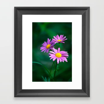 Three purple daisies. Framed Art Print by veronika2v