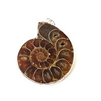 Ammonite fossil pendant, Ammonite Brown  Swirly Nutilus Shells Silver Framed  Pendant, Jewelry