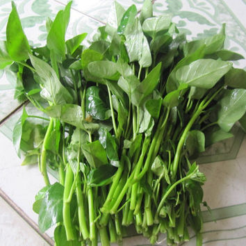 200 Water Spinach/ Morning Glory/ Rau Muong Seeds | Edible Organic Swamp Green Fresh Vegetable Balcony Garden Fruits Plants