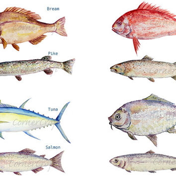 Watercolour fish clipart digital download carp, trout, tuna, sardine, pike, sea fish for fishing themed cards, invitation, bathroom decor
