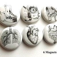 Medical Human Anatomy refrigerator MAGNETS 1 inch eye ear anatomical heart jaw geekery stocking stuffer lung body skeleton party favors gift