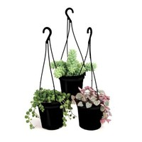 9 cm Hanging Basket Succulent Plant Assorted (3-Pack)-0881006 - The Home Depot