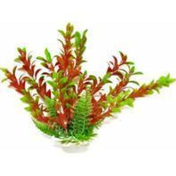 Aquatop Aquatic Supplies - Hygro-like Aquarium Plant With Weighted Base