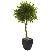 Artificial Tree -5.5 Foot Ficus Tree In Black Wash Planters