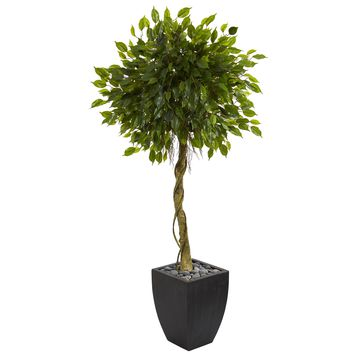 5.5' Ficus Artificial Tree in Black Wash Planter UV Resistant (Indoor/Outdoor)