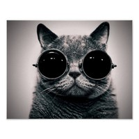 Funny cat poster from Zazzle.com
