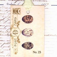 Vintage Bird Eggs on Postcard Gift Tags by Bluebirdlane on Etsy