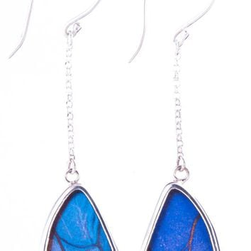 Silver butterfly earrings  - Iridescent Blue Wing Shaped Morpho Didius