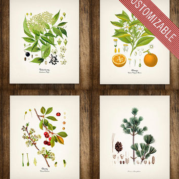Four Flower & Fruit Vintage Botanical Prints