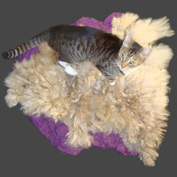 Cat Bed Felted Wool Fleece Cruelty Free Pet Bed - Colored Romney on Amethyst Heather - Supporting Small Farms of The USA