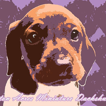 Dachshund Print Photography - Orange & Purple Wall Art  by AstonAcresDachshunds
