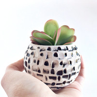 Black and White Planter - Succulent Planter - Small Planter