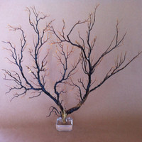 Sea Fan on Acrylic Base Beach Nautical Decor by nakhome on Etsy