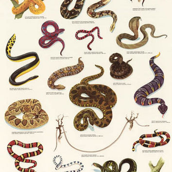 Snakes Reptiles Education Poster 21x33