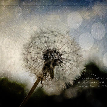 Across the Universe -PHOTO, dandelion photo, twilight, sunset, Beatles lyrics, evening, dark colors, inspirational quote