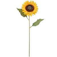 Sunflower Stem By Ashland®