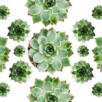 Succulents Collage 8x10. Fine Art Photographic Natural History Print. Scandinavian style. Natural Home Decor. Kitchen