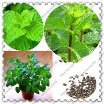 500 pcs/bag spearmint mint seeds edible catnip plant flower seeds vegetable seeds bonsai herb seeds for home garden easy grow