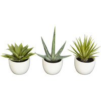 Cactus Southwest Collection (Set of 3)