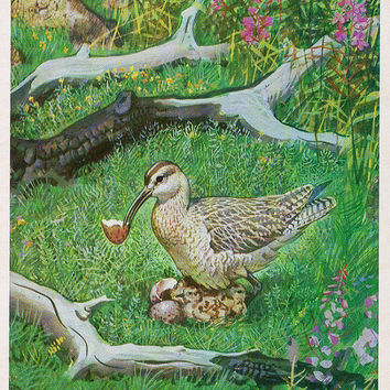 The Curlews Baby (Artist V. Gorbatov) Vintage Postcard - Printed in the USSR, «Fine Art», Moscow, 1984