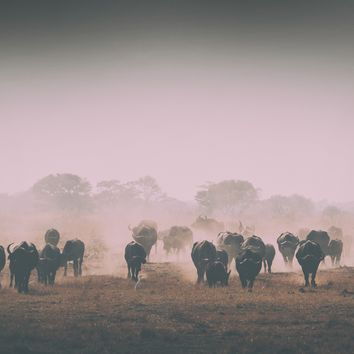 African Animals On Plain Photograph Art Print