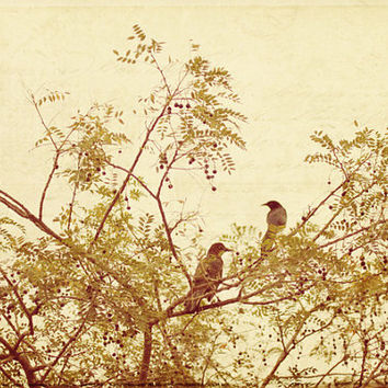 birds, tree, nature, fine art photography
