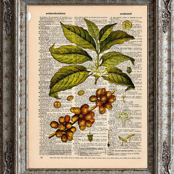 Coffee Plant on Vintage Upcycled Dictionary Art Print Book Art Print Recycled Caffeine Coffee Love bookworm gift