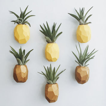 PRE-ORDER Pineapple Air Plant Magnet w/Air Plant (shipping in 2-3 weeks)