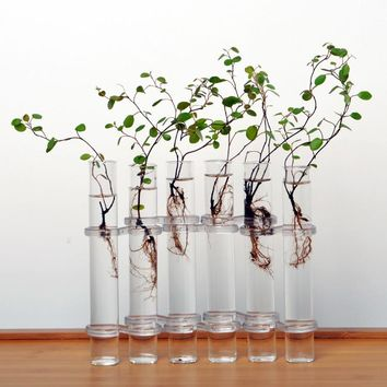 Set of 6 Tube Flower Glass Vase Home Decoration