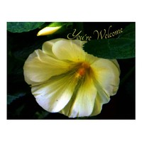 Chrome White Flower You're Welcome Postcard