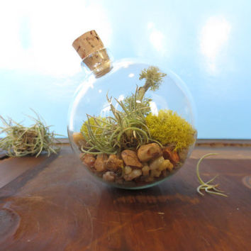 In Perfect Balance...Miniature Desktop Garden, Unique Glass Orb Moss and Lichen Terrarium, Terrarium Decor
