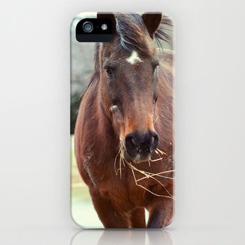HORSE AND HIS HAY - PHOTOGRAPH iPhone & iPod Case by Allyson Johnson