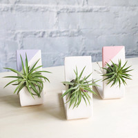 One Air Plant and Handmade Ceramic Holder - Reversible Planter and Tillandsia