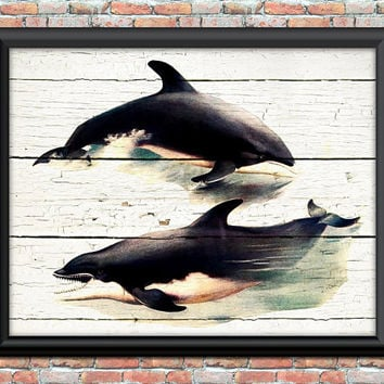 Antique Dolphins Digital Art Print Playing Ocean Sea Nautical History Cottage Chic Home Office Wall Decor