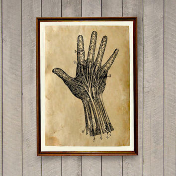 Hand anatomy poster Macabre decor Anatomical print AK613
