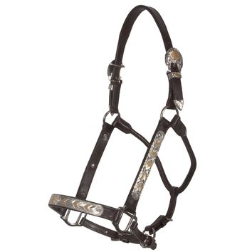Raleigh Phoenix Show Halter with Lead in QH Show Halters
