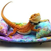 Chaise Lounge for Bearded Dragons, Watercolor Flowers fabric