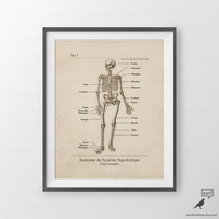 Human Skeleton Anatomy Print, Human Anatomy, Vintage Medical Art, Anatomie Squelette Anatomical Chart, Vintage Medical illustration