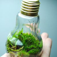 The bright idea terrarium with live ecosystem desk by Run2theWild