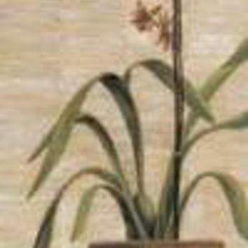 Orchid In Terra Cotta Pot I
